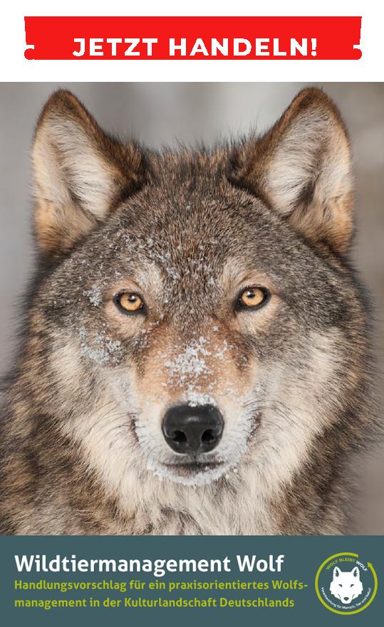 wolfbruschure